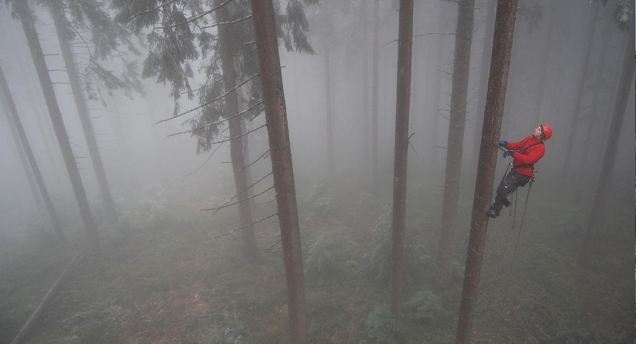 Gospodarka leśna i zbiór nasion